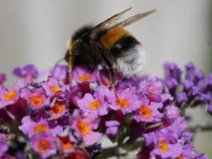 ハチの特徴と効果的な駆除対策とは?