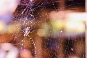 クモの特徴と効果的な駆除対策とは?